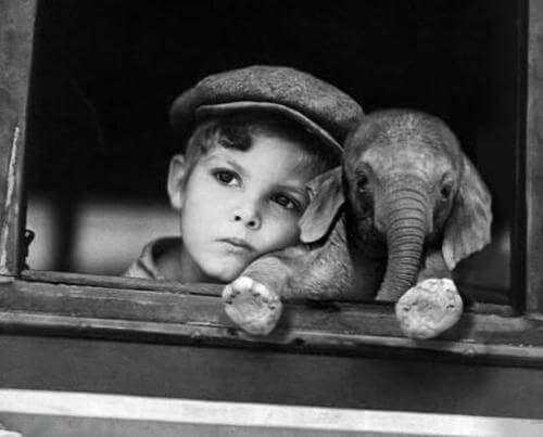 dreng sidder sammen med en babyelefant