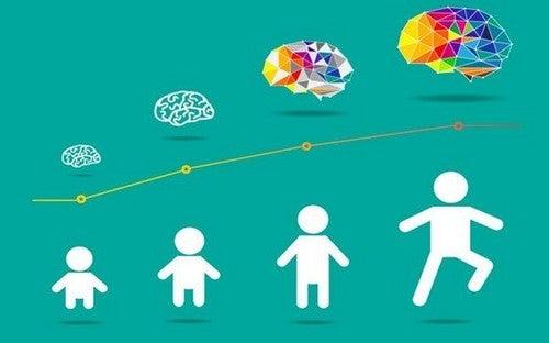 udvikling af hjernen hos børn