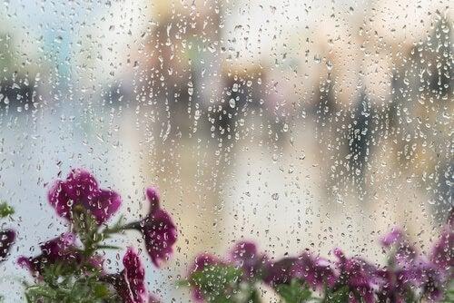 Blomster set gennem vådt vindue