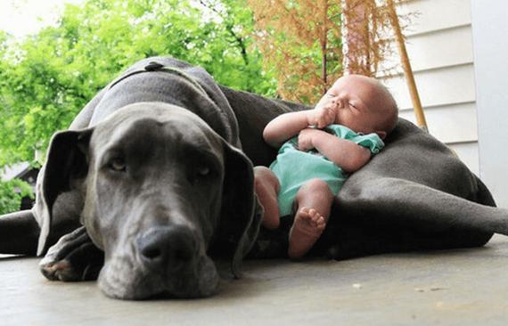 Kæledyr og deres adfærd omkring nyfødte babyer