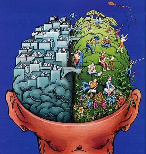 Den menneskelige hjerne