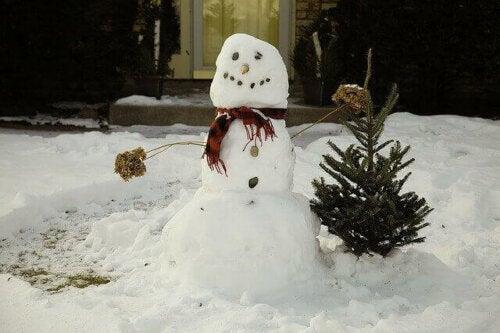 snemand ved siden af grantræ