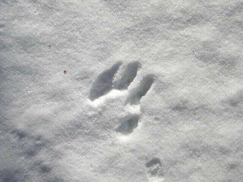 spor i sne