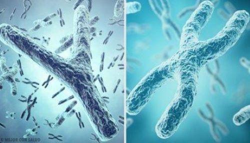 Y og X kromosomer